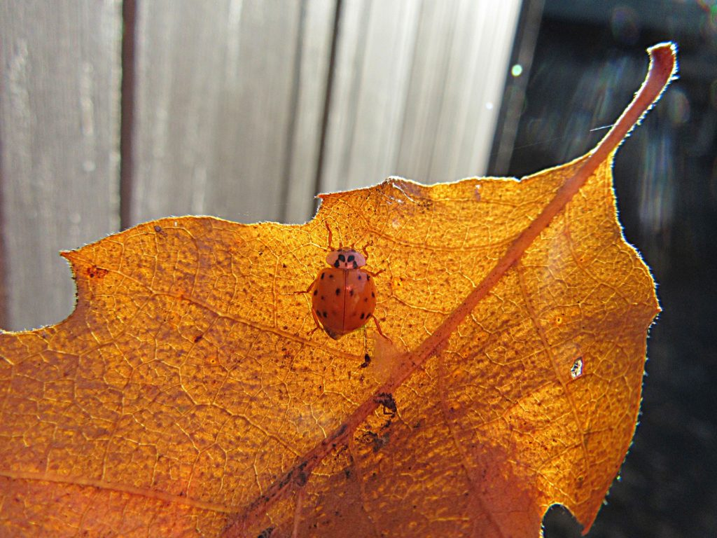 Insect fall leaf